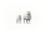 Sheep and Lamb Posters by Emily Adams