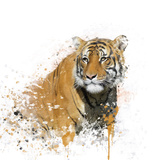 Tiger Portrait Watercolor Print by  SunnyS