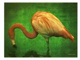 Caribbean Flamingo Posters by  Graffi tee Studios