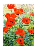 Garden Red Poppies Giclee Print by Christopher Ryland