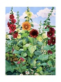 Hollyhocks and Sunflowers Giclee Print by Christopher Ryland