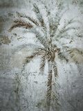 Palm On Concrete Prints by Golie Miamee