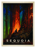 KC NP Sequoia Prints by  Anderson Design Group