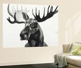 Watercolor Moose Wall Mural by Ben Gordon