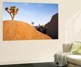 Joshua Tree Dream Wall Mural by Paul Edmondson
