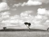 Safari Drive Prints by Golie Miamee