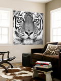 Tiger Wall Mural by PhotoINC Studio