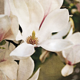 Magnolia Dusk Giclee Print by Pete Kelly