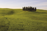 Cypress Trees Tuscany Giclee Print by Bill Philip