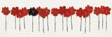 Poppy Drift II Impression giclée par Alice Buckingham