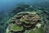 Healthy Reef-Building Corals Thrive in Komodo National Park, Indonesia Photographic Print by  Stocktrek Images