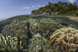 A Diverse Array of Reef-Building Corals in Raja Ampat, Indonesia Photographic Print by  Stocktrek Images