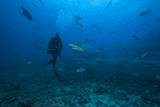 Scuba Diver and Silvertip Shark at the Bistro Dive Site in Fiji Photographic Print by  Stocktrek Images