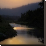 Sunlit River Stretched Canvas Print by Madeline Clark