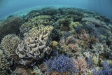 Colorful Corals Near the Island of Alor, Indonesia Photographic Print by  Stocktrek Images