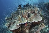 Juvenile Fish Swarm around a Coral Colony in Raja Ampat, Indonesia Photographic Print by  Stocktrek Images