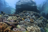 A Beautiful Coral Reef Thrives on an Underwater Slope in Indonesia Fotografisk tryk af Stocktrek Images,