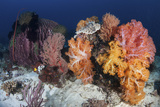 Soft Corals and Invertebrates on a Beautiful Reef in Indonesia Photographic Print by  Stocktrek Images