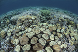 Mushroom and Hard Corals in Alor, Indonesia Photographic Print by  Stocktrek Images