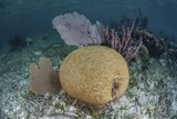 Brain Coral and Gorgonians Grow Off Turneffe Atoll in Belize Photographic Print by  Stocktrek Images