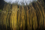 Colorful Reeds Grow to the Surface Along the Edge of a Freshwater Lake Photographic Print by  Stocktrek Images