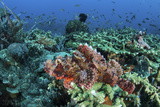 A Venomous Scorpionfish on a Coral Reef in Komodo National Park, Indonesia Photographic Print by  Stocktrek Images