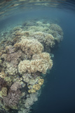A Diverse Coral Reef Drops into Deep Water in Raja Ampat, Indonesia Photographic Print by  Stocktrek Images
