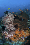 A Colorful, Healthy Coral Reef Thrives in Indonesia Photographic Print by  Stocktrek Images