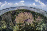 Gorgonians and Reef-Building Corals Near the Blue Hole in Belize Photographic Print by  Stocktrek Images
