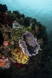 Colorful Crinoids and Sponges Grow on a Vibrant Reef in Indonesia Reprodukcja zdjęcia autor Stocktrek Images