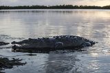 A Large American Crocodile Surfaces in Turneffe Atoll, Belize Photographic Print by  Stocktrek Images