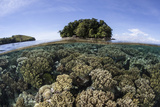 A Healthy Coral Reef Grows in the Solomon Islands Photographic Print by  Stocktrek Images