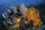 Soft Coral Colonies and Gorgonians on a Coral Reef in Indonesia Photographic Print by  Stocktrek Images