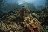 A Beautiful Coral Reef Grows in Komodo National Park, Indonesia Photographic Print by  Stocktrek Images