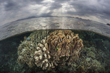 Sunlight Falls on a Beautiful Reef in Komodo National Park Photographic Print by  Stocktrek Images
