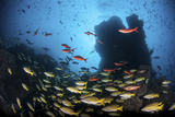Schooling Fish Swim over a Rocky Reef Near Cocos Island, Costa Rica Photographic Print by  Stocktrek Images