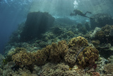 A Scuba Diver Swims Above a Beautiful Coral Reef in Indonesia Photographic Print by  Stocktrek Images