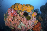 Soft Corals, Sponges, and Other Invertebrates on a Reef in Indonesia Photographic Print by  Stocktrek Images