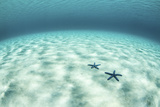 Starfish on a Brightly Lit Seafloor in the Tropical Pacific Ocean Photographic Print by  Stocktrek Images