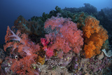 Vibrant Soft Coral Colonies Grow on a Reef in Lembeh Strait Photographic Print by  Stocktrek Images