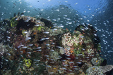 A Colorful Coral Reef Is Covered by Fish in Indonesia Photographic Print by  Stocktrek Images