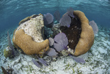 A Brain Coral and Gorgonians Grow Off Turneffe Atoll in Belize Photographic Print by  Stocktrek Images