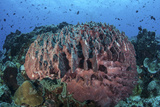 A Massive Barrel Sponge Grows on a Healthy Coral Reef Photographic Print by  Stocktrek Images
