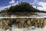 Soft Leather Corals Grow in the Shallow Waters in the Solomon Islands Photographic Print by  Stocktrek Images