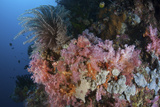 Soft Corals and Other Invertebrates Grow on a Reef in Indonesia Photographic Print by  Stocktrek Images