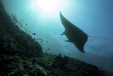 A Manta Ray Swims Through a Current-Swept Channel in Indonesia Photographic Print by  Stocktrek Images