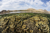 Fragile Corals Grow in Shallow Water in Komodo National Park Photographic Print by  Stocktrek Images