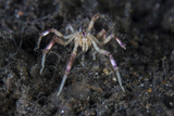 A Sea Spider Crawls Along the Mucky Seafloor Photographic Print by  Stocktrek Images
