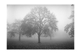 Owl'S Head Park Trees Fog 2 Photographic Print by Henri Silberman