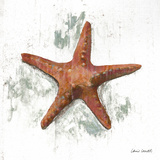 Starfish on White II Prints by Lanie Loreth